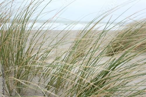fototapeta na ścianę Dunes at the coast of the North Sea