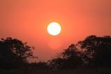 sunset in savannah - 244396350