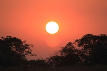 sunset in savannah