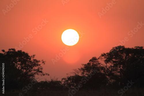 sunset in savannah © SuGak