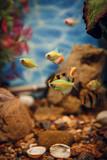 Colorful fish in the aquarium
