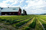 old barn in field, in Sweden Scandinavia North Europe