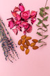 Organic Skincare Ingredients on pink background. Vertical