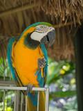 Tropical Parrot in Aruba