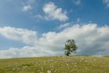 Fototapeta Fototapeta z niebem - parco nazionale d'Abruzzo © alex