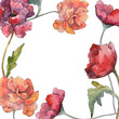 Red poppy floral botanical flower. Watercolor background illustration set. Frame border ornament square.