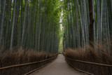 Fototapeta Bambus - Arashiyama bamboo forest in Kyoto, Japan. © Anges
