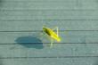Grasshopper on a wet surface