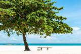 Bench under a tree on a beautiful white sand tropical beach in Bintan Island, Indonesia - 244527745