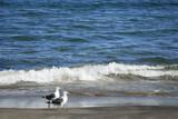 海鳥 海 波 砂浜 素材