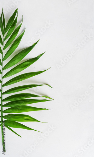 Palm tropical leaf on concrete light surface with copy space, flat lay. Spa concept