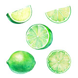 Watercolor set of lime slices