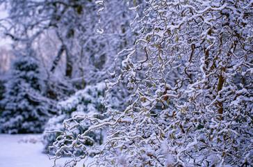 экзотический куст в снегу и инее