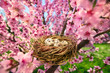Leinwanddruck Bild - Bird's nest with eggs in a blossoming tree