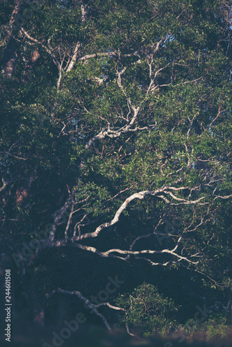 A large tree in the tropical forest - 244601508