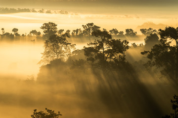 Mist cover forest during the sunrise at Thung Salaeng Luang National Park Phitsanulok and Phetchabun Provinces of Thailand