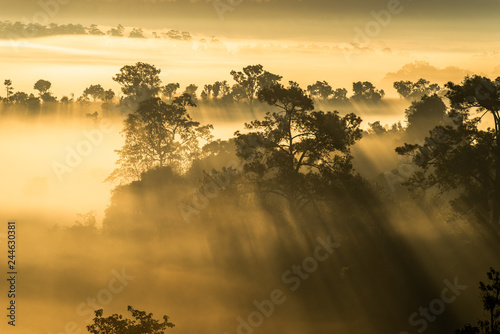 Mist cover forest during the sunrise at Thung Salaeng Luang National Park Phitsanulok and Phetchabun Provinces of Thailand © finallast