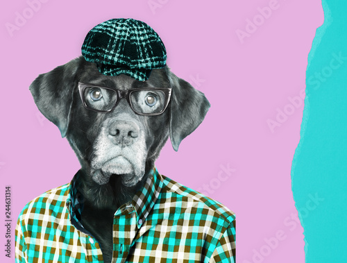 Old labrador dog retriever wearing eye glasses, wearing a vintage pageboy cap. Contemporary art collage. - 244631314