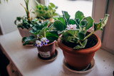 House plants on the window sill