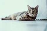 Katze mit Blick nach oben