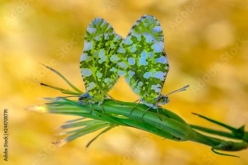 Wall mural Closeup  beautiful butterflies sitting on flower