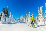 Fototapeta Las - Ski in Beskidy mountains. The skituring man, backcountry skiing in fresh powder snow. © Gorilla