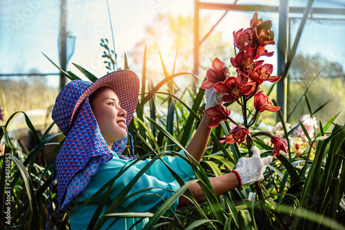 The young woman worker is taking care of the orchid flower in garden. Cymbidium orchid Red. - 244716953