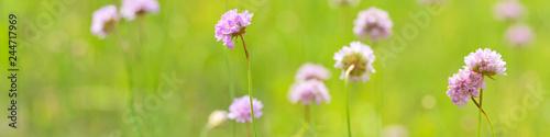 light pink wild flowers in long green stripe - 244717969