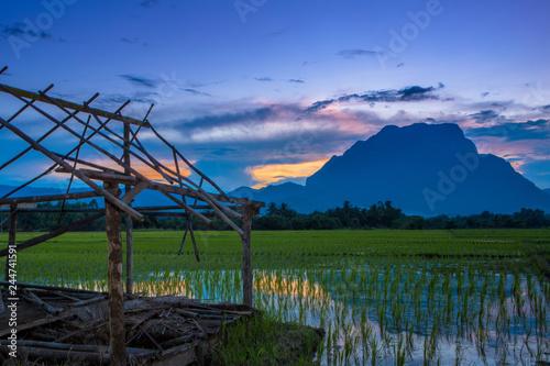 fototapeta na ścianę Rice fields,cabin and Chiang Dao mountains in Chiang Mai Thailand