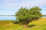 Apple tree - 244765114