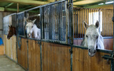 Fototapeta Konie - Close up of  horses  at stable © JackF