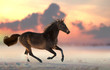 Brown horse run gallop on the snow - 244790540