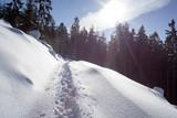 Fototapeta  - śnieg - widok pod słońce © qrrr