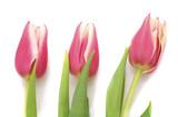 Fototapeta Tulipany - Bouquet pink tulips. © voren1
