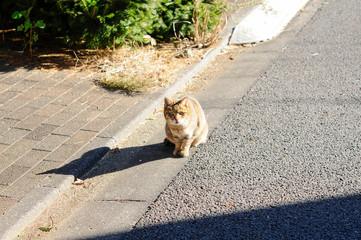 警戒する野良猫 © araho