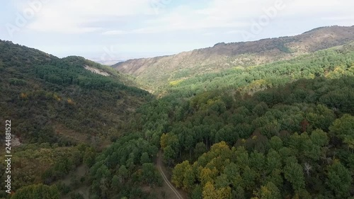 Panorama from the air. Beautiful aspen forest in the mountains. Autumn. Kazakhstan.