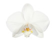 Close-up of beautiful white Orchid flower isolated on  white background.