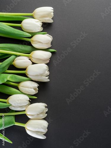 White tender tulips on dark gray background.