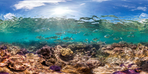 Healthy coral reef and school of fish in Palmyra panorama