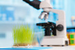 Green plants and scientific equipment in biology laboratary