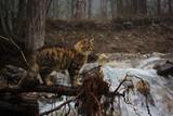 wild cat under the river