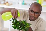 man watering bonsai leaves