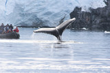 whale in the waters of the Antarctic - 244998360