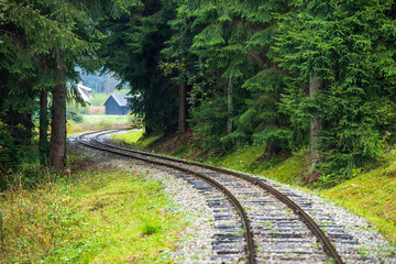 wavy log railway tracks in wet green forest with fresh meadows