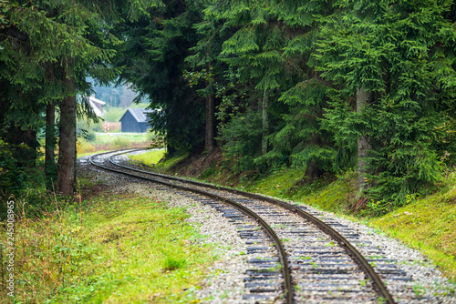 wavy log railway tracks in wet green forest with fresh meadows - 245008965