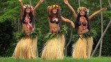 Group of beautiful young synchronized Polynesian female dancers entertaining in traditional costume barefoot outdoor French Polynesia South Pacific - 245097940