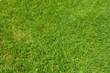 Green grass / herbe verte - 245114596