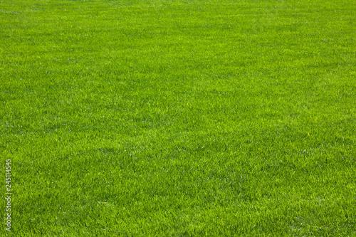 Green grass / herbe verte