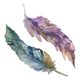 Bird feather from wing isolated. Watercolor background illustration set. Isolated feathers illustration element.