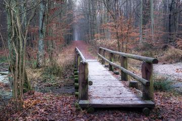 Wooden bridge at autumn in Kabacki forest, Masovia, Poland